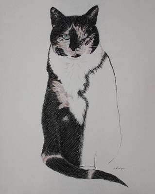 Spirit Cat Essence Drawing - Friend II by Patsy Sharpe