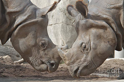 Greater One Horned Rhino Photograph - Friend Or Foe by Jason Waugh