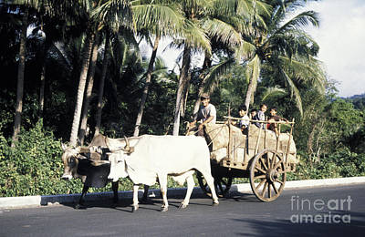 Photograph - Friendly Oxcart Riders El Salvador by John  Mitchell