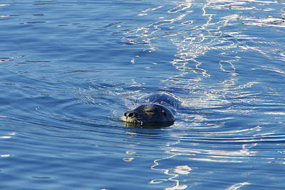 Photograph - Friendly Seal by Marilyn Wilson