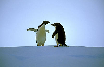 Photograph - Sorry Your Proposal Has Been Put On Ice by Cliff Wassmann