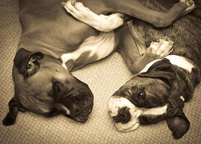 Brindle Photograph - Friendship Embrace by DigiArt Diaries by Vicky B Fuller