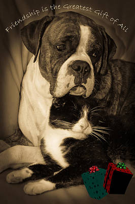 White Boxer Dog Photograph - Friendship Is The Greatest Gift Of All Greeting by DigiArt Diaries by Vicky B Fuller