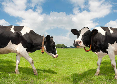 Art Print featuring the photograph Frisian Cows by Hans Engbers