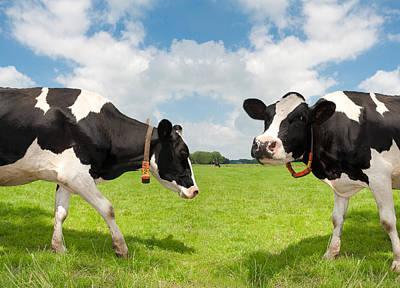 Frisian Cows Art Print by Hans Engbers