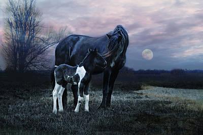 Animals Photos - Frisian by Joachim G Pinkawa