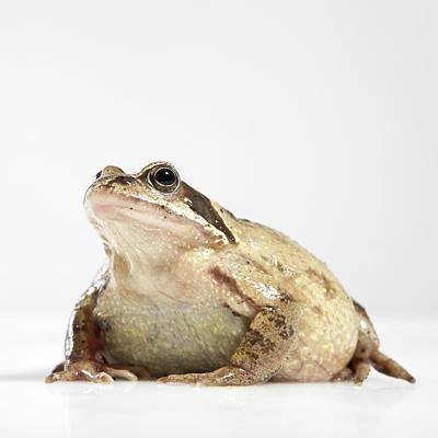 Frog Art Print by Darren Woolridge Photography - www.DarrenWoolridge.com