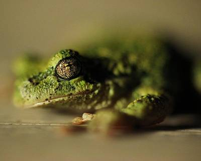 Frog Eyes Art Print by Leigh Edwards