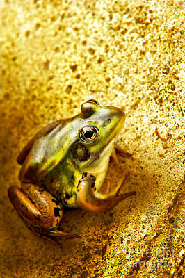 Cement Photograph - Frog by HD Connelly