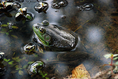 Frog In The Millpond Art Print by Kay Lovingood
