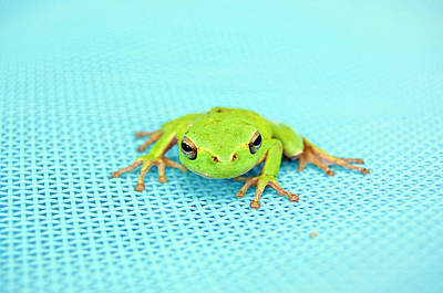 Frog Photograph - Frog Italy by Rhys Griffiths Photography