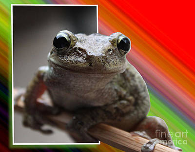 Frog  Art Print by Jeanne Andrews