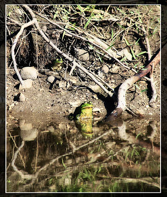Photograph - Frog King by Tiana McVay