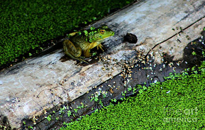 Frogs Photograph - Frog On A Log by Nick Gustafson