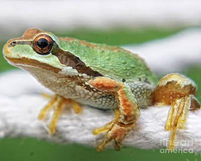 Frog On A Rope Art Print by Billie-Jo Miller