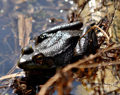 Photograph - Frog by Ronald Grogan