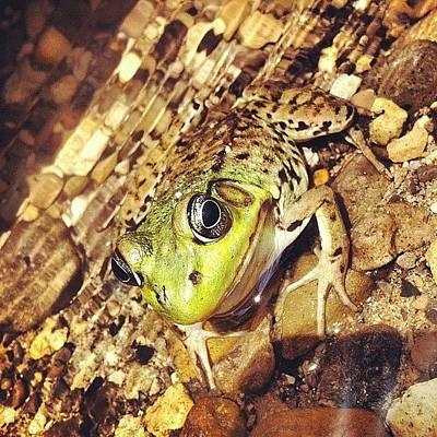 Iphone 4 Photograph - Frogger by Goran Junior
