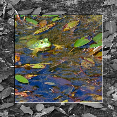 Photograph - Froggy Morning by Robert Clayton