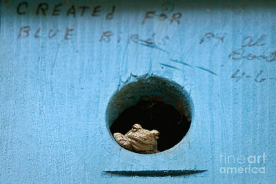 Frog Photograph - Froghouse Two by Susan Isakson