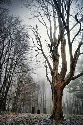 Photograph - From Behind The Fog by Emily Stauring