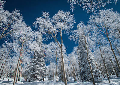 Frost And Snow Covered Trees, Colorado Art Print by Karen Desjardin