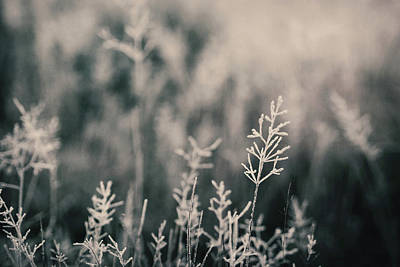 Cold Temperature Photograph - Frost On Grasses, London by Kirstin Mckee