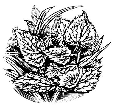 Frost On Leaves, Woodcut Art Print by Gary Hincks