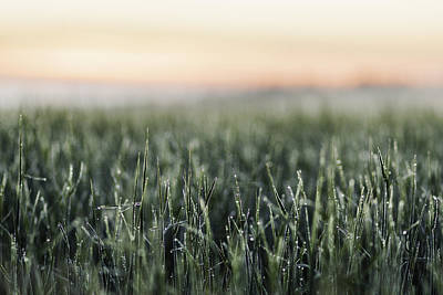 Frost On Tall Grass In Field Art Print