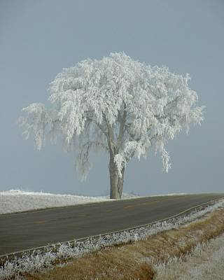 Art Print featuring the photograph Frost On The Big Tree  by Penny Meyers