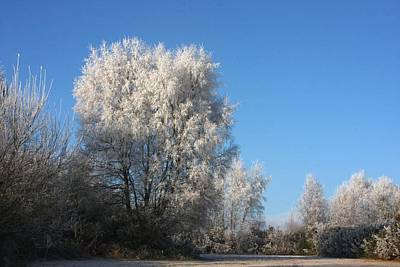 Photograph - Frost Trees by Ed Lukas