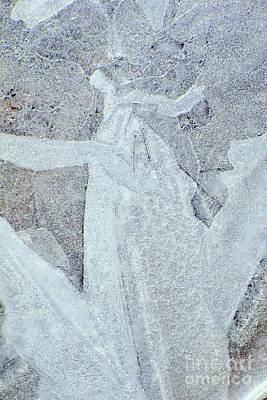 Photograph - Frosted Angel by Frank Townsley