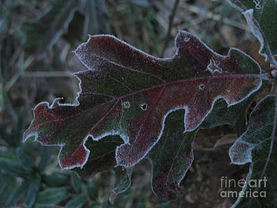 Photograph - Frosted by Donna Brown