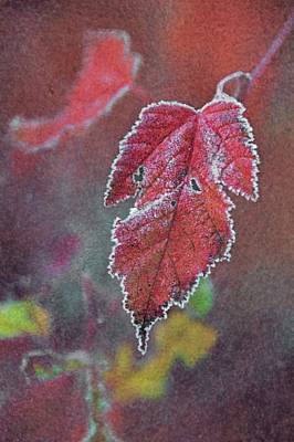 Frosted Art Print by Odd Jeppesen