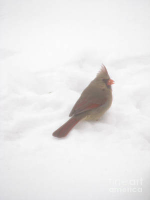 Photograph - Frosted Snow Bird I by Mark Holbrook