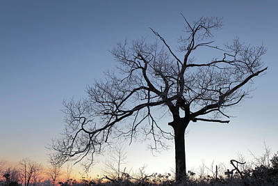 Photograph - Frosty Dawn Majestic Tree by John Stephens