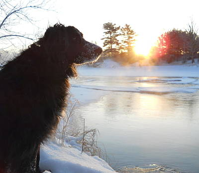 Photograph - Frosty Dog On River Bank by Kent Lorentzen