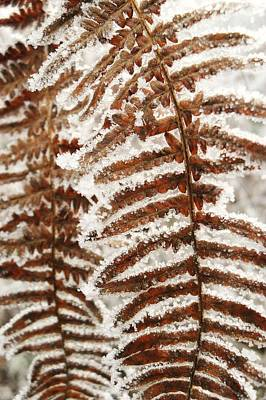 Frosty Fern Art Print