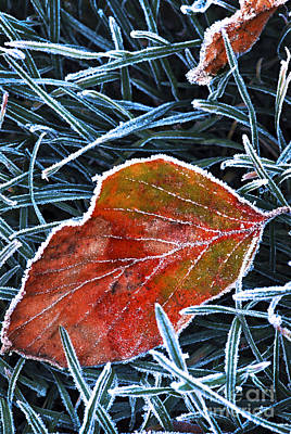 Hoarfrost Photograph - Frosty Leaf by Elena Elisseeva