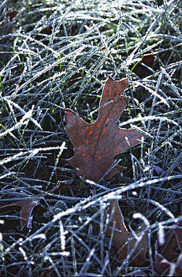 Photograph - Frosty Morning by Bernard Lynch