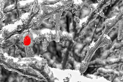Frozen Berry Art Print