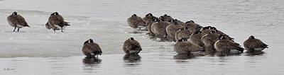 Photograph - Frozen Flock by Kevin Munro