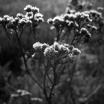 Popular Rustic Neutral Tones - Frozen flowers in bw by Jouko Lehto