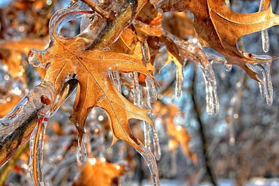 Frozen Leaves Art Print