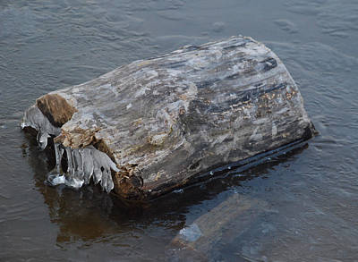 Photograph - Frozen Log by Richard Bryce and Family