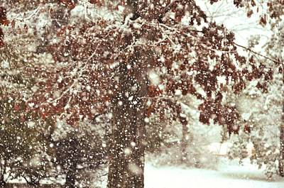 Photograph - Frozen Mahogany by JAMART Photography