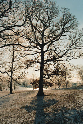 Art Print featuring the photograph Frozen Oak Silhouette by Peg Toliver
