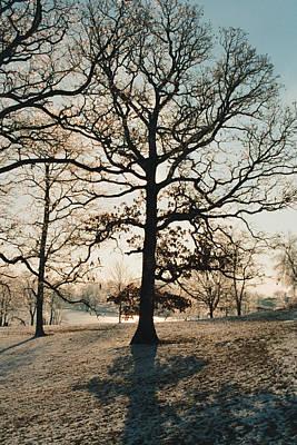 Frozen Oak Silhouette Art Print