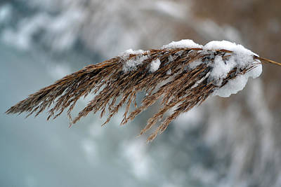 Photograph - Frozen Pampas. by Terence Davis