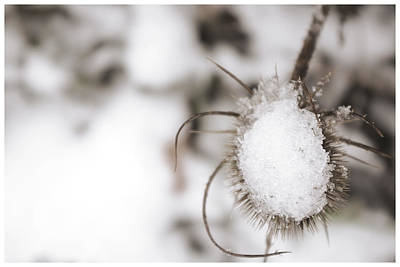 Photograph - Frozen Plant by Lenny Carter