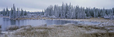 Frozen Swampland, Near 100 Mile House Art Print by David Nunuk